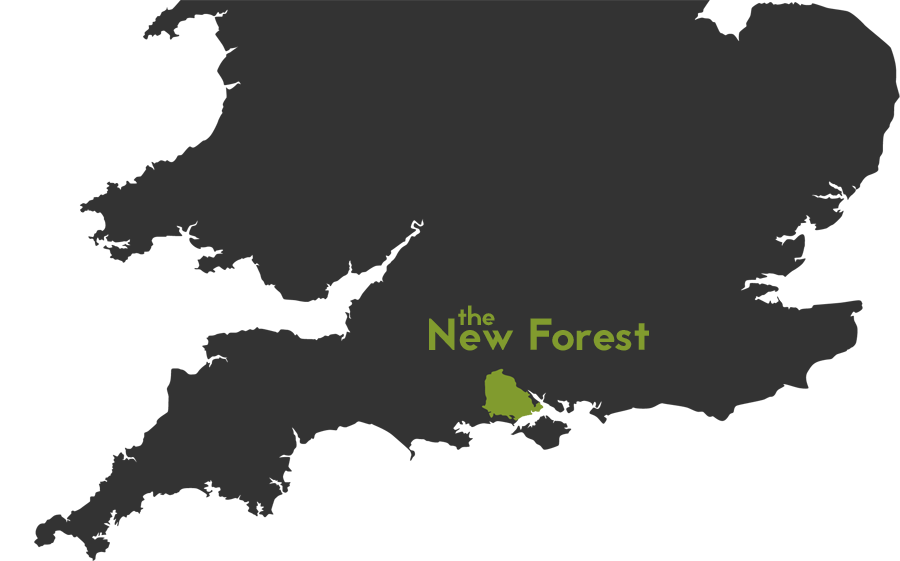 About the New Forest  Cycle New Forest